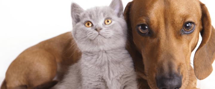 Combien coute un animal de compagnie par année ?
