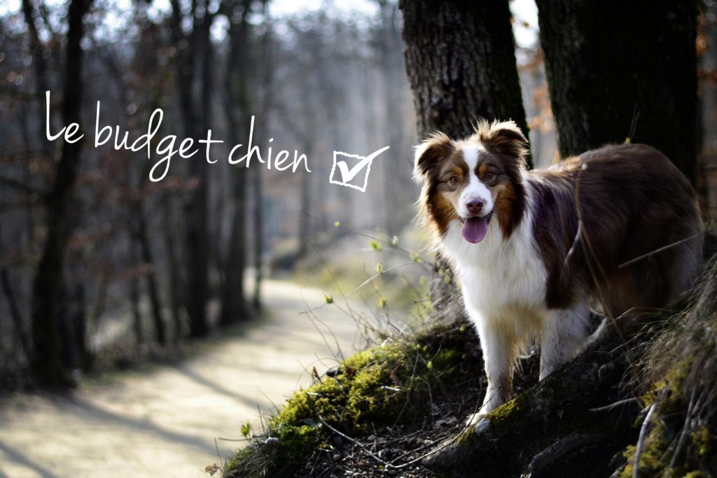 budget animaux chien