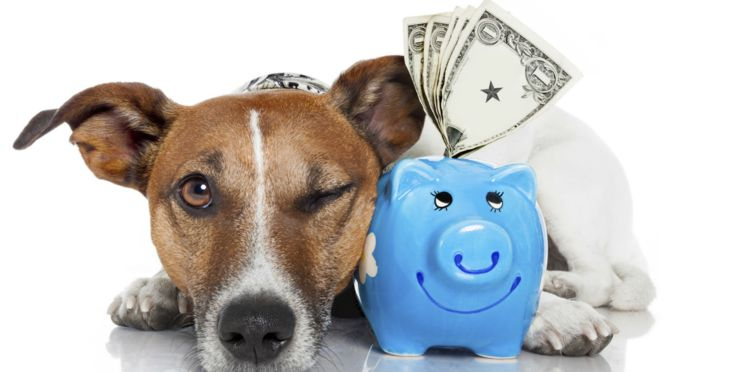 budget animaux